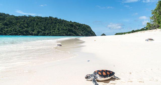 เกาะตาชัย หาดทรายสวยงามคอฟฟี่เมต